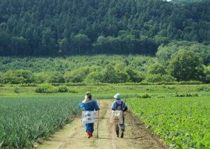 【JAところ通信】農業研修生 稲垣はなさんの研修模様を撮影しました