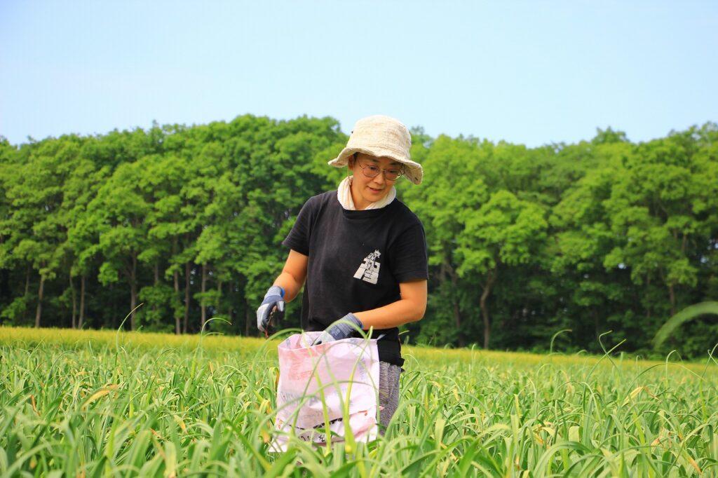 【JAところ通信】農業研修生 渋谷千浩さんの研修模様を撮影しました②