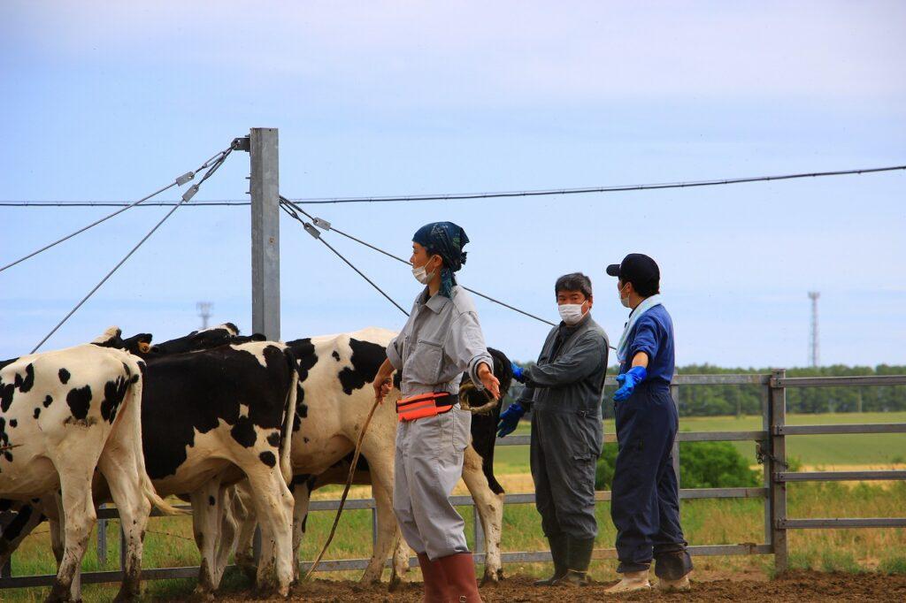 【JAところ通信】農協牧場検査を行いました